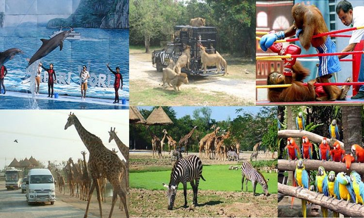 Safari World Thailand